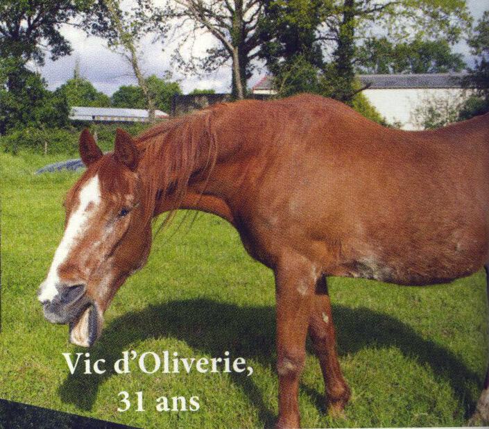 VICC - TF né en 1987 - accueilli en avril 2015 chez Pech-Petit  Vic11
