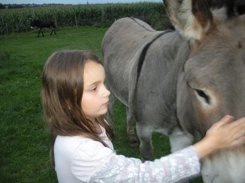 Séjour au milieu des ânes en roulotte Dscn8014
