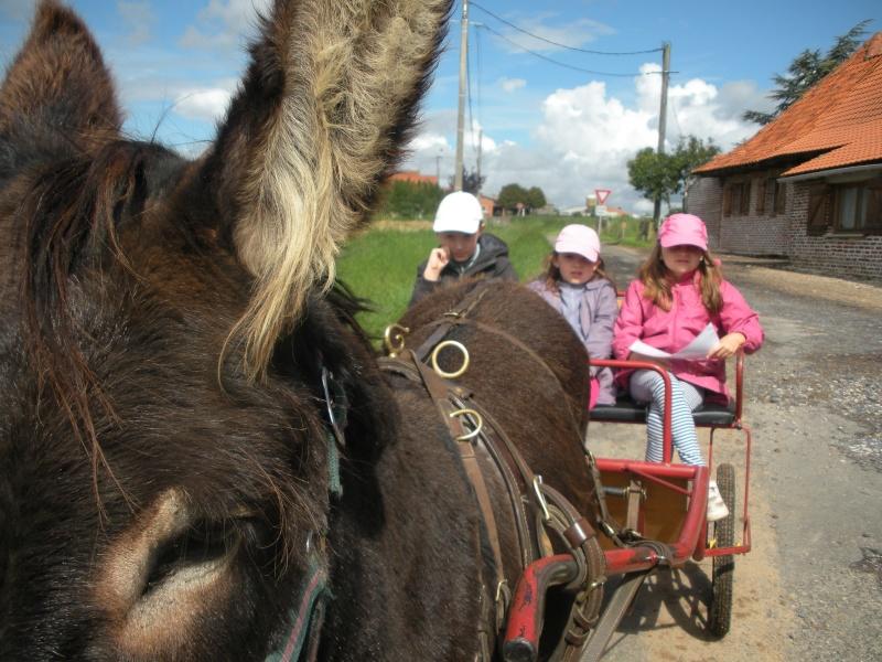 Séjour au milieu des ânes en roulotte Dscn8111