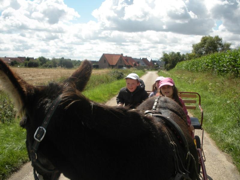 Séjour au milieu des ânes en roulotte Dscn8112