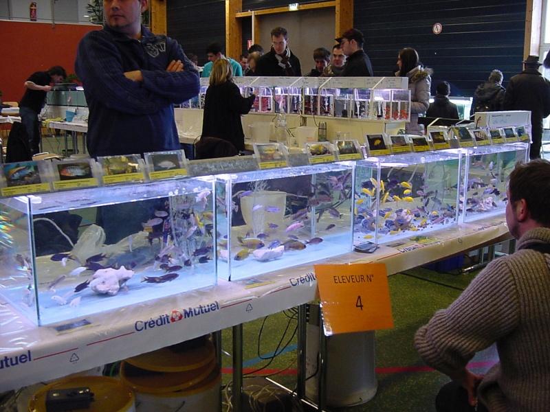Bourse de l'Aqua96 le 17 février 2013 à Dossenheim(67) - Page 2 Dsc00069