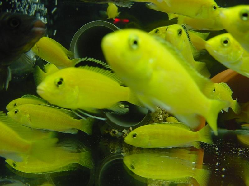 Bourse aux poissons Saint-Avold 17 mars 2013 14-17h Dsc00274