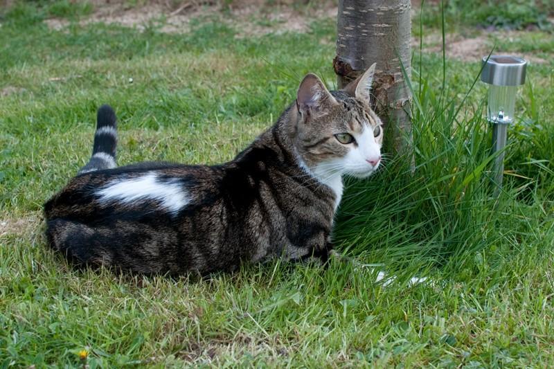 Agressivité d'un jeune chat : qu'est ce que j'ai fait de travers? Dsc_9711