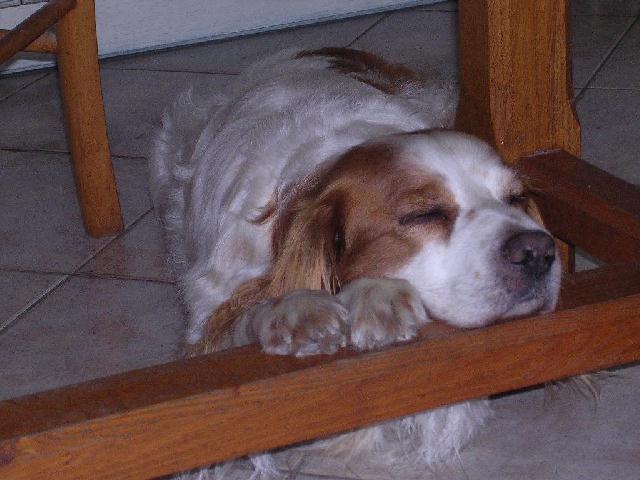 Posture originale pour dormir....et chez vous c'est comment??? - Page 3 Dscn1210