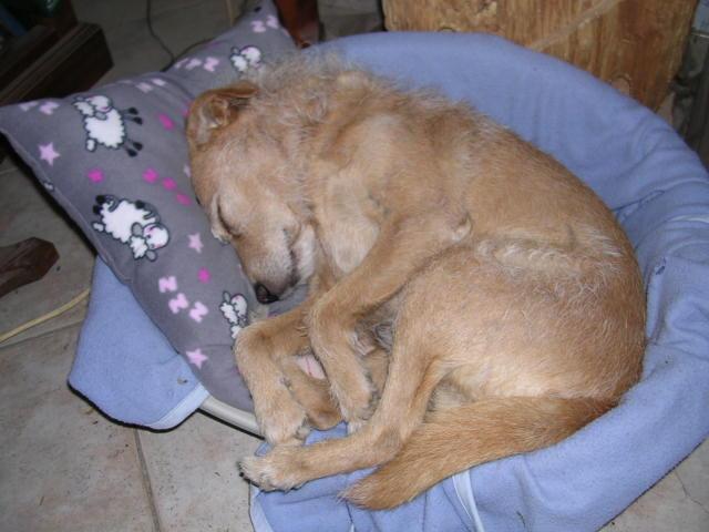 Posture originale pour dormir....et chez vous c'est comment??? - Page 3 Dscn6012