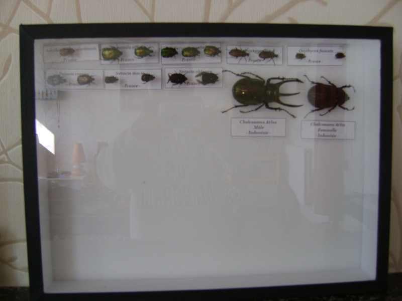 Présentation des collections Entomologiques - Page 6 Gtgrfg10