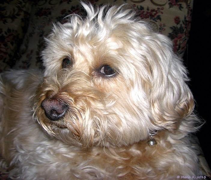 Regard canin   Cimg7510