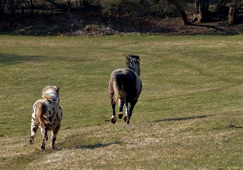 mes chevaux ( + grat-grat ) P4022311