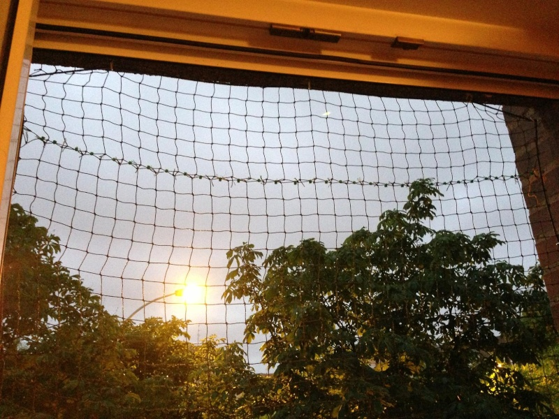Como colocar un red de protección en una ventana Img_3914