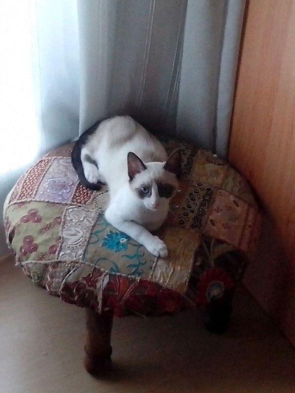 Libe, ahora Michi en su casa Img_4010