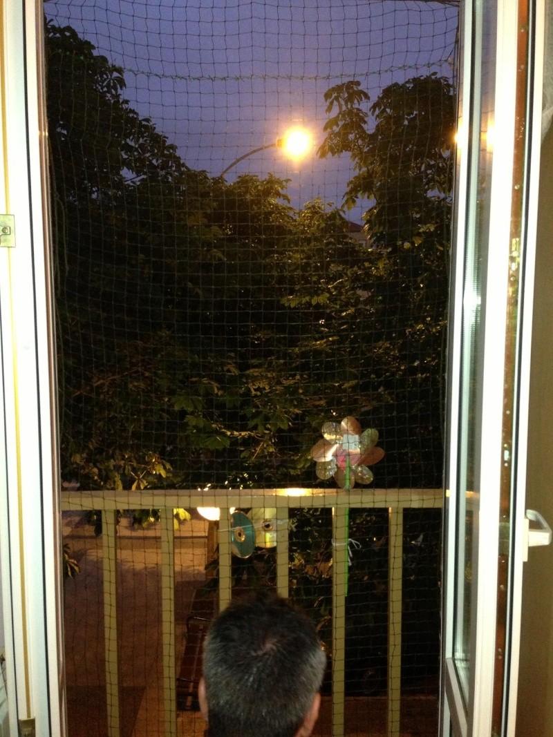 Como colocar un red de protección en una ventana Img_4012