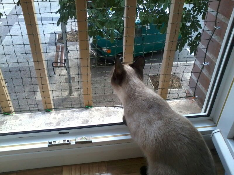 Como colocar un red de protección en una ventana Img_4015