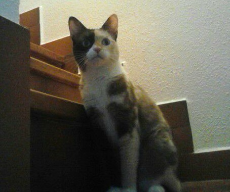 Paty, la gata abandonada en una finca tras pasar el plazo que nos dieron Img_4216