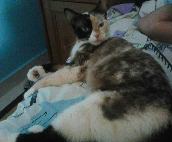 Paty, la gata abandonada en una finca tras pasar el plazo que nos dieron Img_4217