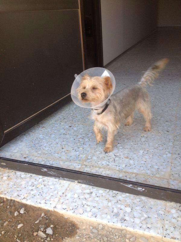 El nuevo rescate de Ef es Troy. Y es un perro :) Img_5614