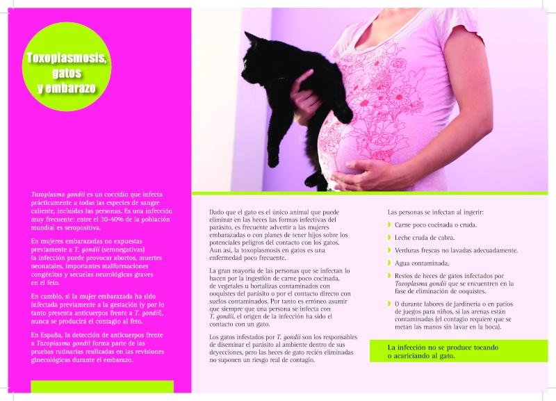 Toxoplasmosis, gatos y mujeres embarazadas. TODO lo que deberías saber. Page-111