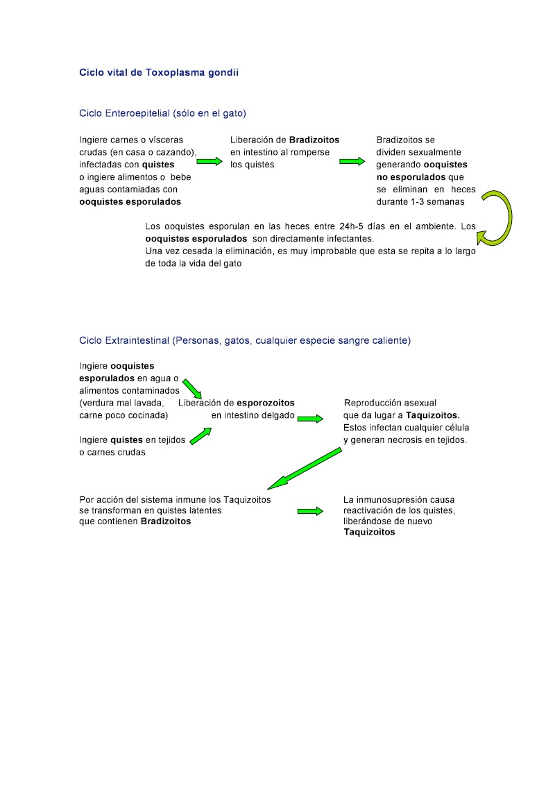 Toxoplasmosis, gatos y mujeres embarazadas. TODO lo que deberías saber. Page-510