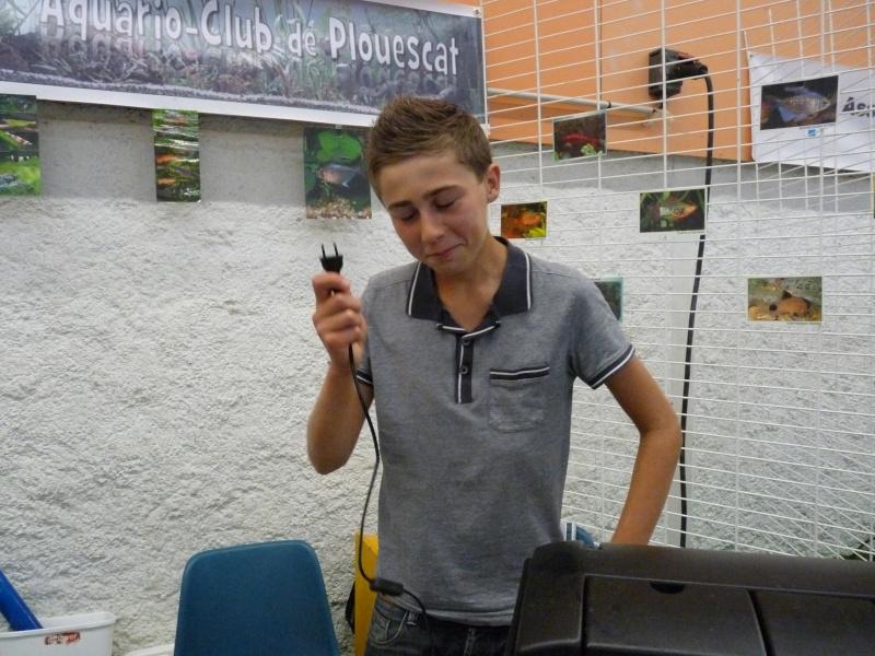 ACTIVITES CLUB AQUARIOPHILE DE PLOUESCAT 5610