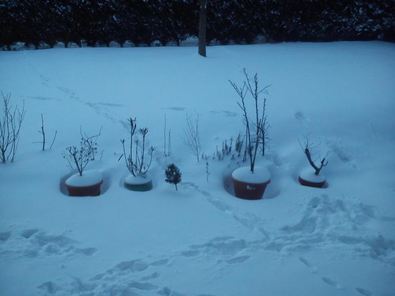 la neige  Arbre_10
