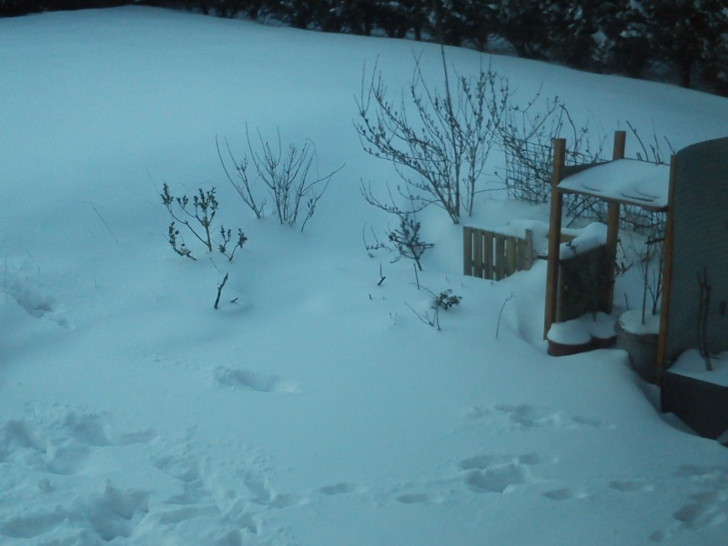 la neige  Arbre_11