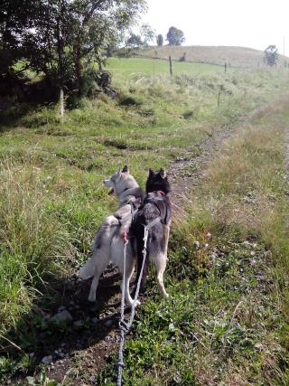 Cradok et Freaks dans le Cantal... Cradok raconte Img_2014