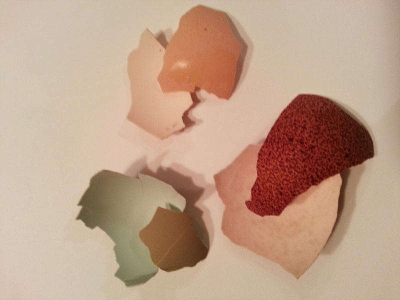 Oeufs de couleurs différentes chez une même poule 20130216