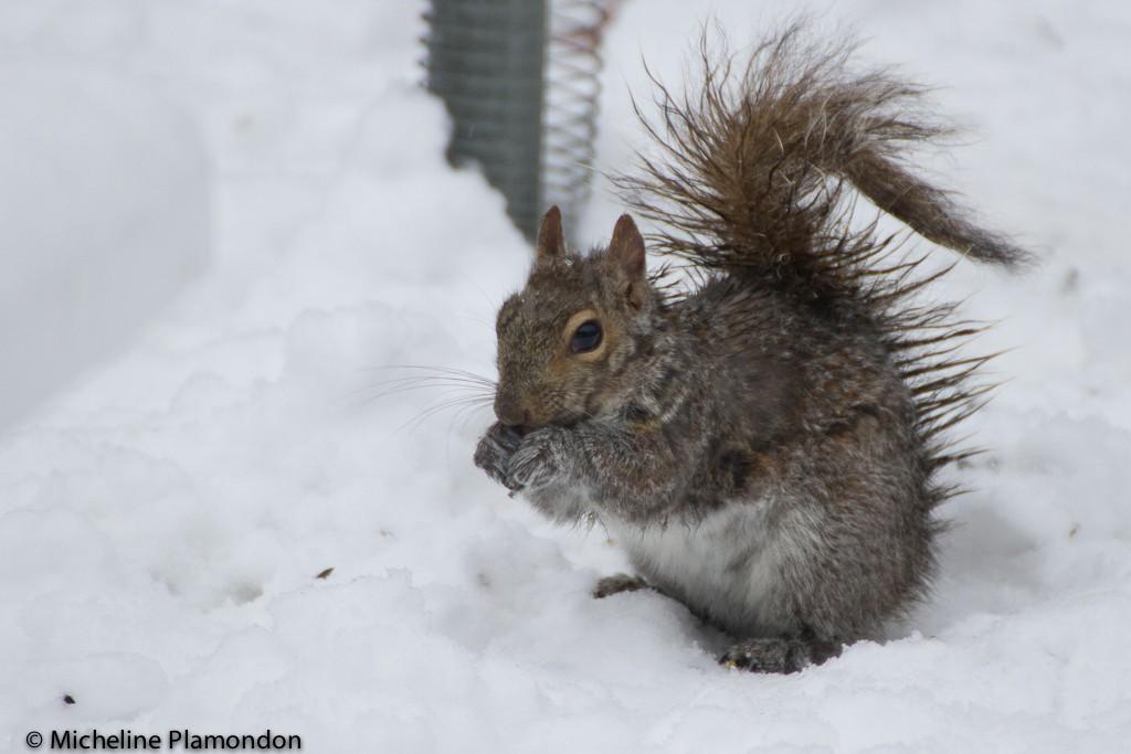 Grésil = écureuil tout mouillé! Acureu10