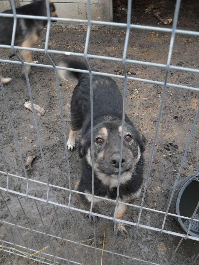 EVORA, croisée berger, née en 2009 - Trouvée dans la cour d'une entreprise en 2012 - parrainée par Sky 30 - FB-SOS-SC-R- Evora10