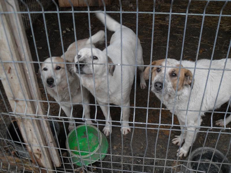 fata - FATA, née le 12/06/2009, arrivée chiot au refuge (soeur de Mickey et fille de Tara) - en FA dans le 49 - GARANT - SOS -R-FB-SC-30MA Les_311