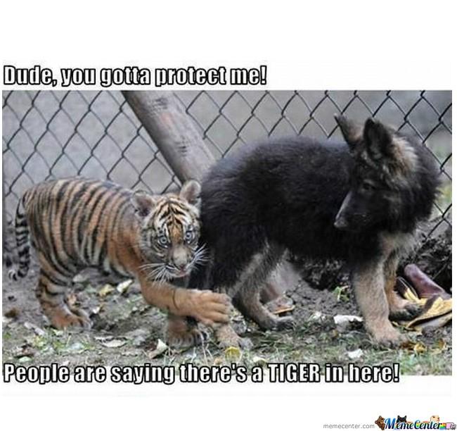 Funny pics Protec10