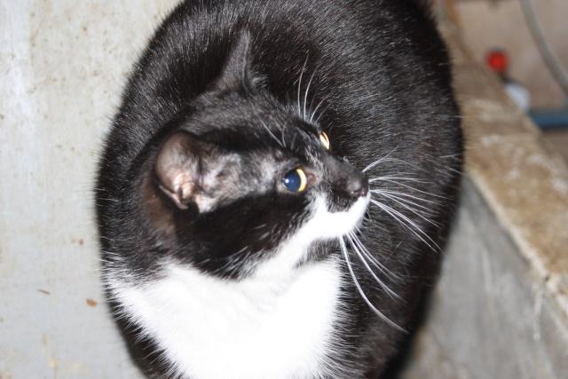 Réglisse-Menthe -noir et blanc - né en 05/2012 012110
