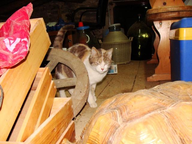 TRICOLINE -tricolore - née en 04/2011  Dsc06710