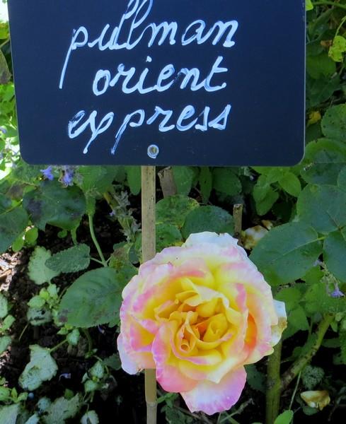 rosa pullman orient express Img_0946