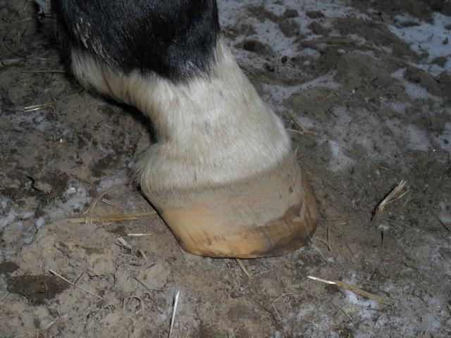 pieds plats. Sam_1912