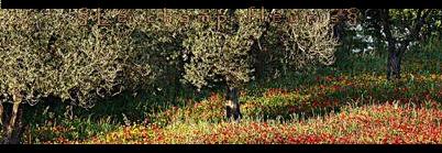Le champ fleuris