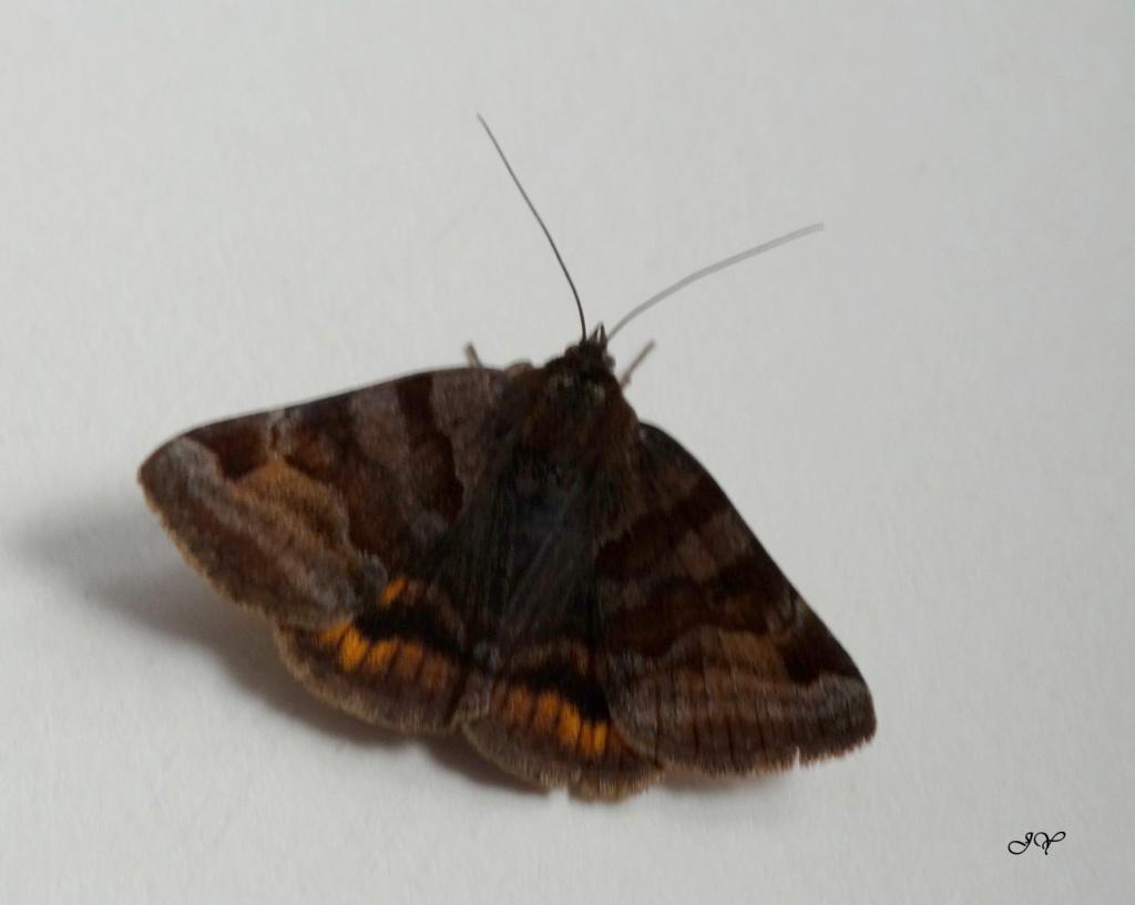 Petit papillon. Dans_l11