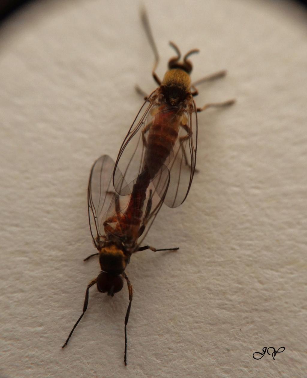 Petites mouches Sur_le10