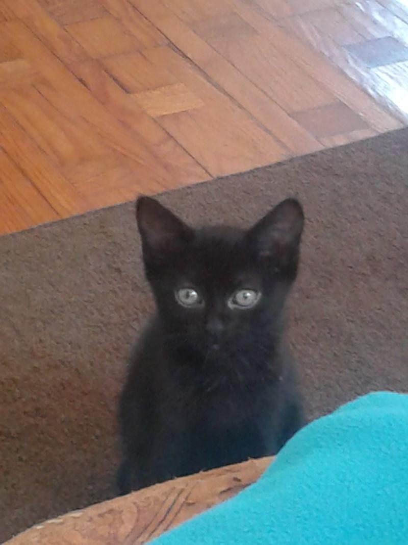 ADOPTE, Ikea chaton 2 mois noir 20130915