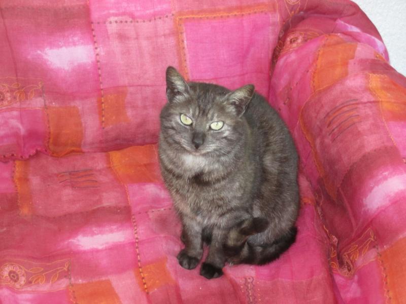 Lio, Jeune chatte de 1 an grise cendre de 9 mois n° 250269801983323 - Page 2 Img_2112