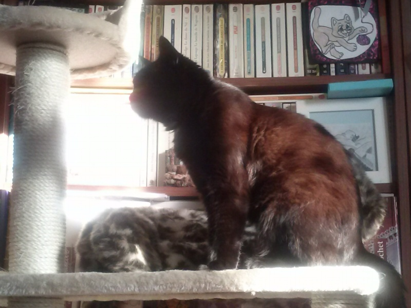 Chats noirs - Page 2 Cam00410