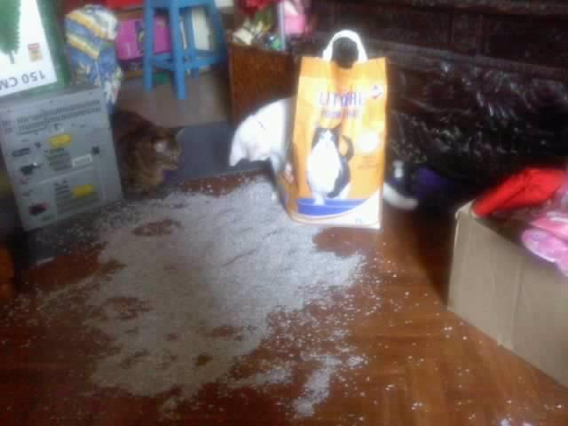 Quelle est la pire bêtise faite par vos chats ? Resize10