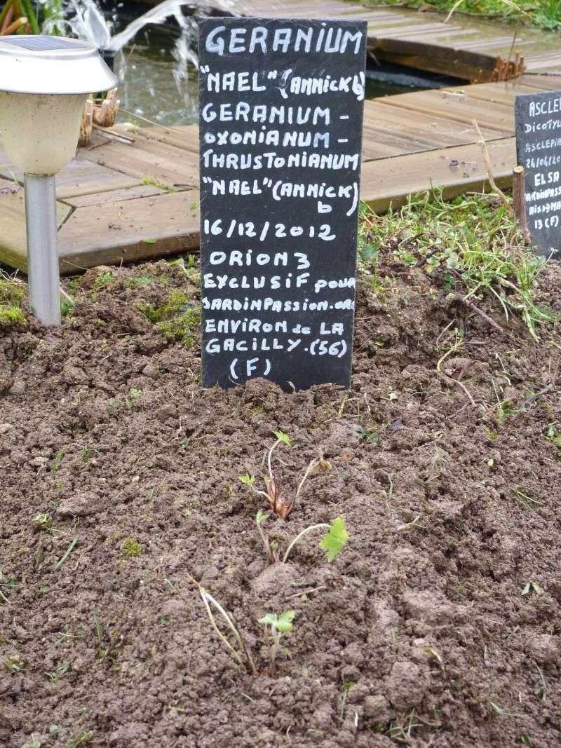 Donation de plants ou graines P1200710