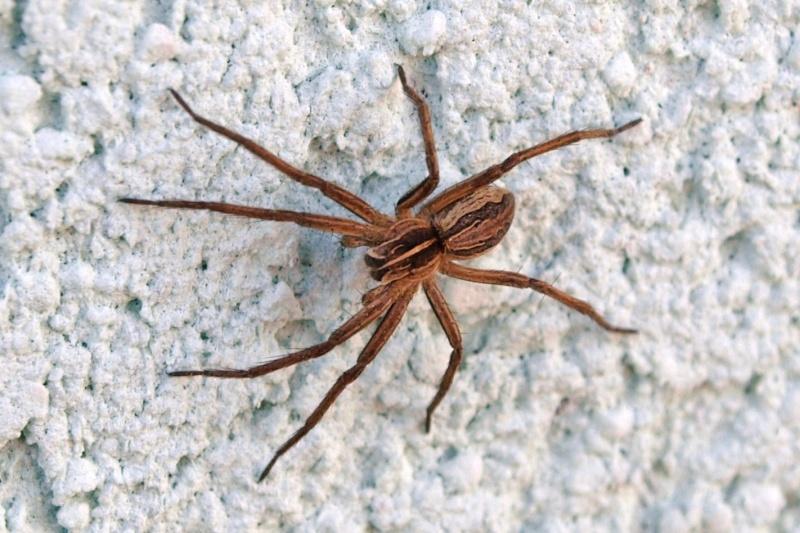 Une Araignée.  2510