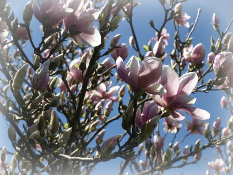Enfin le printemps :) A4178010