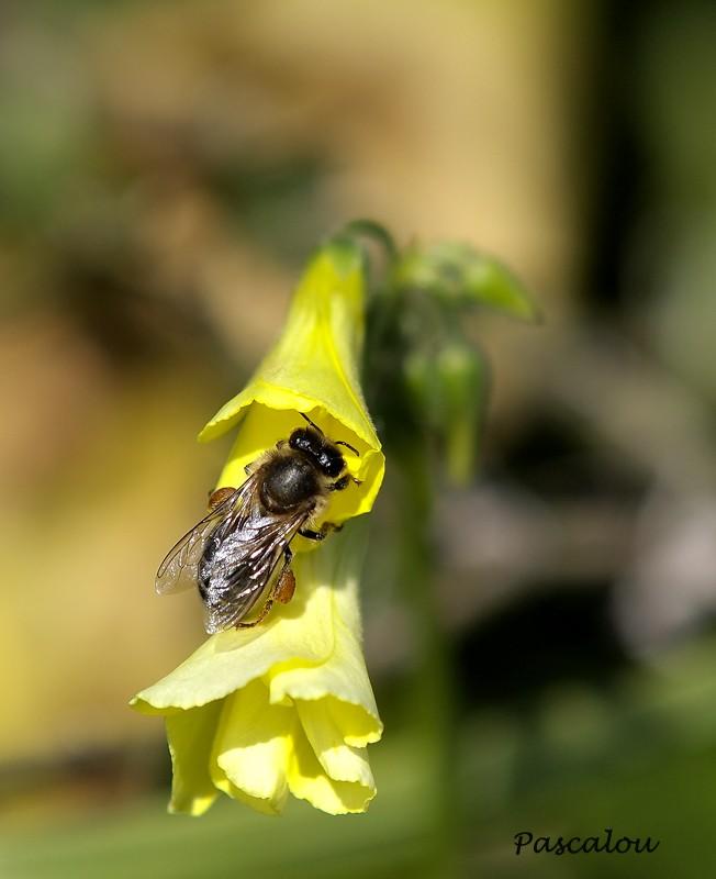 amorce du printemps Insect10