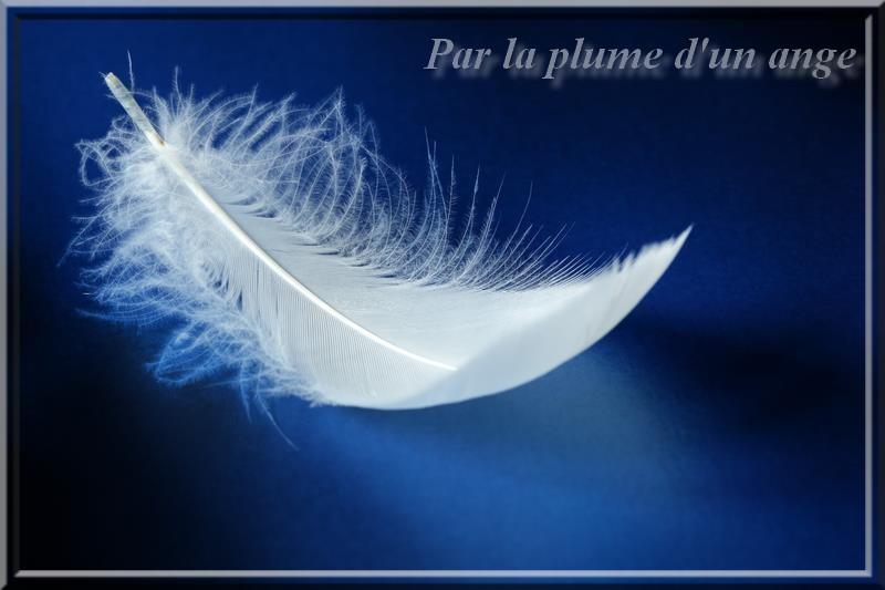 par la plume d'un ange Par_la10