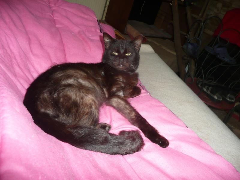 Minuit chat noir Mai 2012 FIV+ (ADPK 35) P1110110
