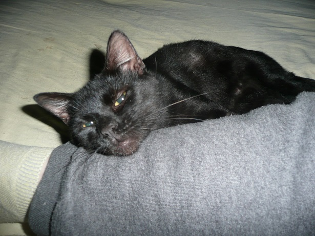 Minuit chat noir Mai 2012 FIV+ (ADPK 35) P1130912