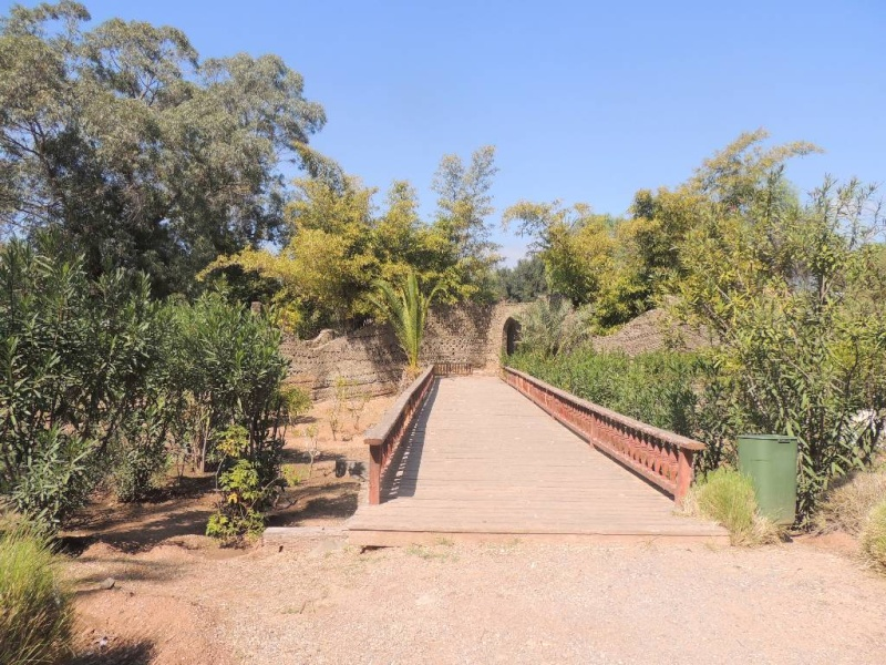 AGADIR: le jardin OLAHO Dscn1721