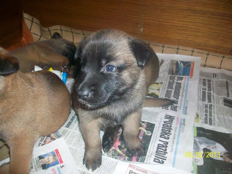 Ma chienne en gestation a des pertes gluante rouge un peu rose - Page 3 Pictur12